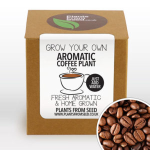 gifts for coffee lovers - Grow Your Own Aromatic Arabica Coffee Plant Kit